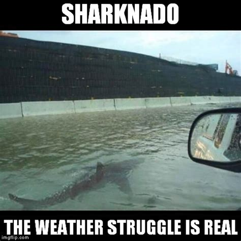 Sharknado Meme - sharknado imgflip