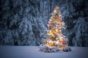 Christmas Tree With Snow » Home Design 2017