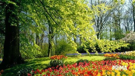 i giardini di marzo accordi giardini di marzo i giardini di marzo la guida al