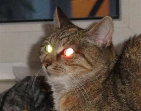 laser light for cats top 10 best images of laser eyed cats