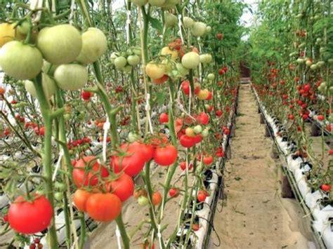Review Lu Jamur 7 usaha agribisnis paling menguntungkan di indonesia