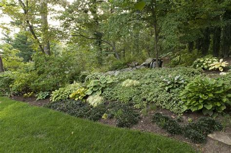 backyard ground cover 20 best images about ground cover to prevent erosion on