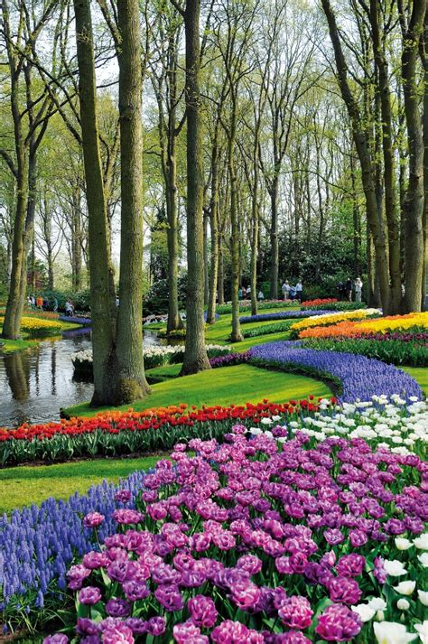 You To See Flower Garden Things To See Near Amsterdam The Tulips At Keukenhof