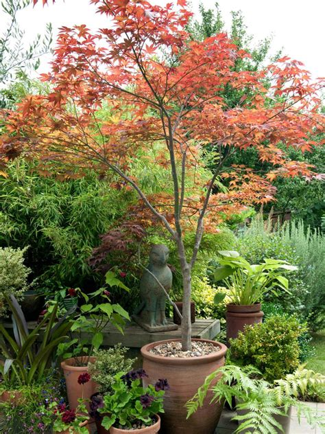 shade tree for small backyard shade trees for small landscapes hgtv