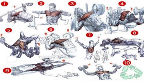 the 15 best chest exercises chest workout chart best fitness workout healthy body