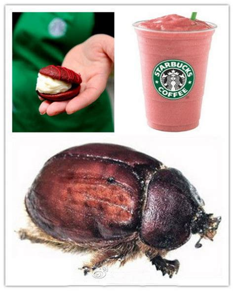 what are cochineal bugs new style for 2016 2017