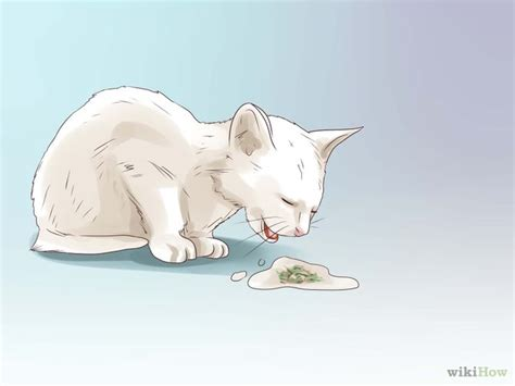 how to deworm a 4 ways to deworm cats wikihow