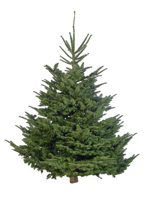 how much is a real christmas tree cut your own tree crockford bridge farm surrey