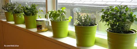 Window Sill Herbs Designs Image Gallery Indoor Kitchen Garden