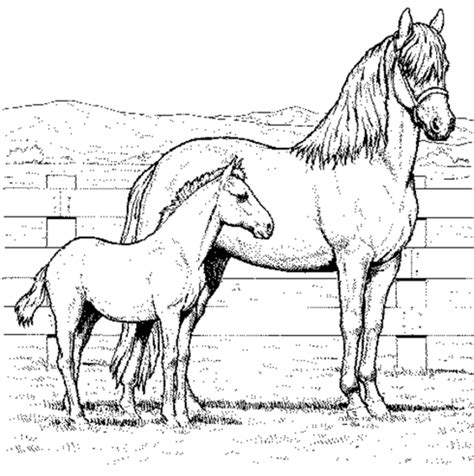 coloring pictures of horses coloring page coloring ville