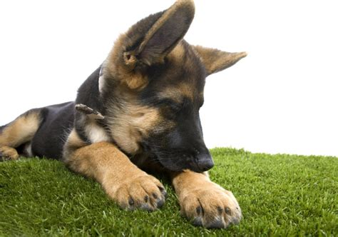 what causes spots on dogs treating and preventing spots on dogs american kennel club