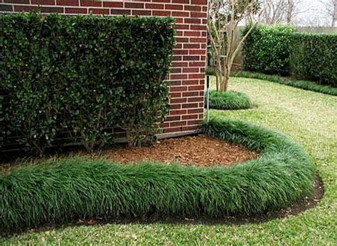 mondo grass border will have to look into this gardening pinterest grasses
