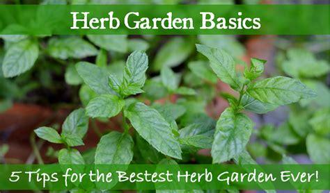 herb garden basics herb garden basics 5 tips for the bestest herb garden