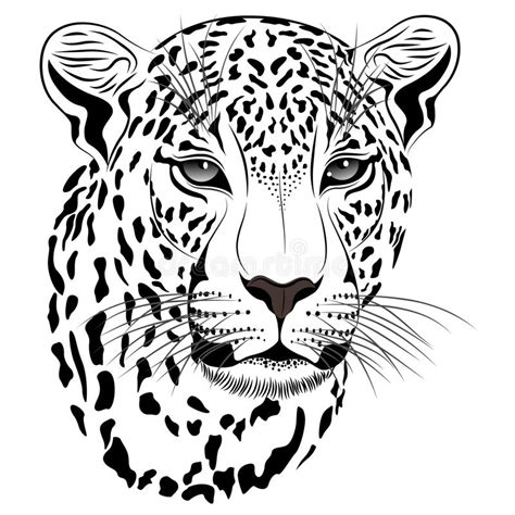 leopard tattoo stock vector illustration of predatory