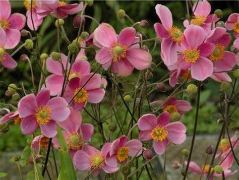 fiori perenni ombra erbacee perenni tappezzanti e non verde e paesaggio