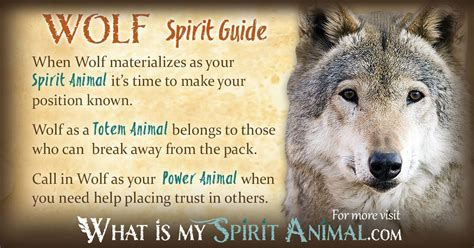 power animal oracle cards mundometafisicocom