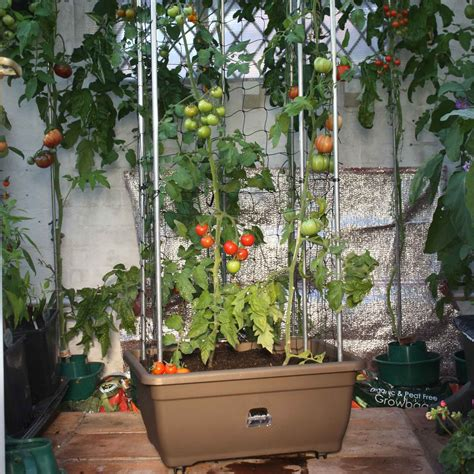 tomato success kit harrod horticultural uk