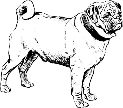 Pug Drawing Outline by Pug Clip At Clker Vector Clip Royalty Free Domain