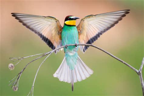 b07dxrw69c la langue des oiseaux la langue des oiseaux int 233 gr 233 dans le jeu se connaitre par