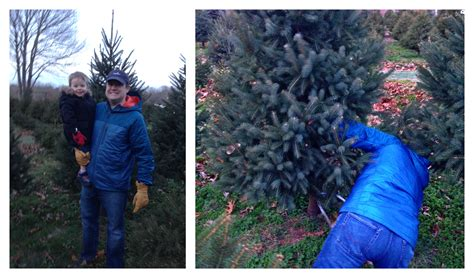 o christmas tree weespring com