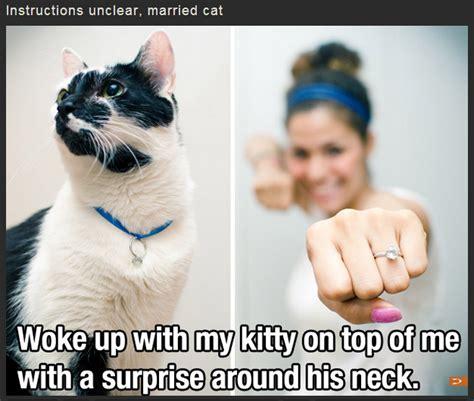 Spider Pubic Hair Meme Newhairstylesformen2014 - ceiling cat know your meme autos post