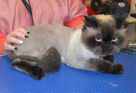 grooming services kylies cat grooming services