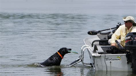boat dog boarding ladder dog boarding ladder drifter marine