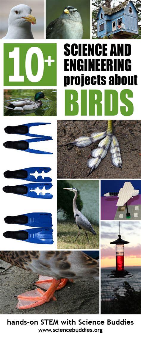 science backyard backyard bird science
