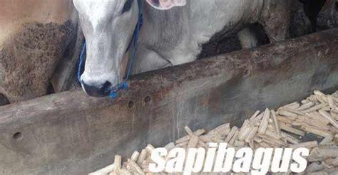 Limbah Roti Pakan Ternak efisiensi pakan konsentrat sapi potong