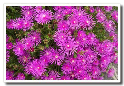 fiori primaverili da giardino fiori di primavera da giardino 28 images fiori di
