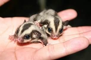 Pics photos baby australian animals