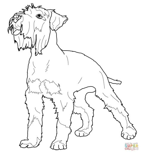 Schnauzer Coloring Pages miniature schnauzer coloring page free printable coloring pages