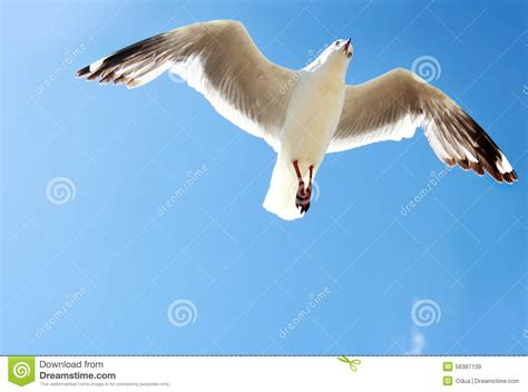 bird relaxing in blue sky photo page everystockphoto a bird flying high in the blue sky stock image image