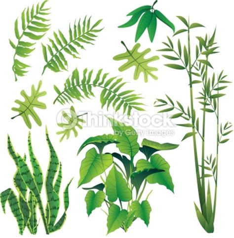 forest plants drawings