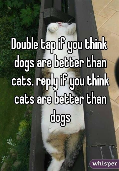 are cats or dogs better 17 best images about dogs are way better than cats on