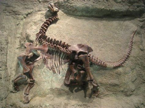 pictures  dinosaur fossils