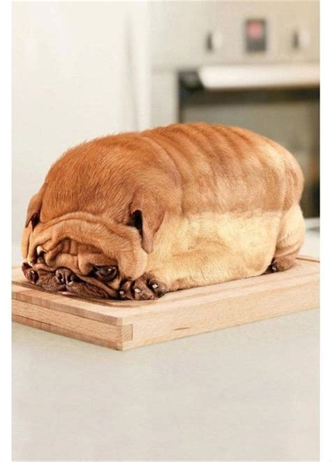pug loaf of bread pug loaf of bread dump a day