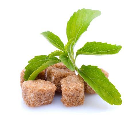 Bibit Tanaman Stevia Rebaudiana Si Daun Manis Pemanis Alami Stevia Rebaudiana Si Manis Pengganti Gula