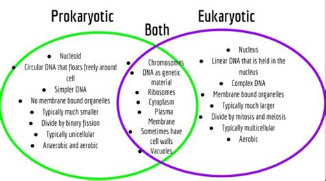 prokaryotic and eukaryotic cells venn diagram cell and cell membrane biomodderfied