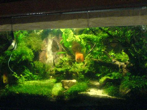 membuat air terjun  aquascape simple aquascape