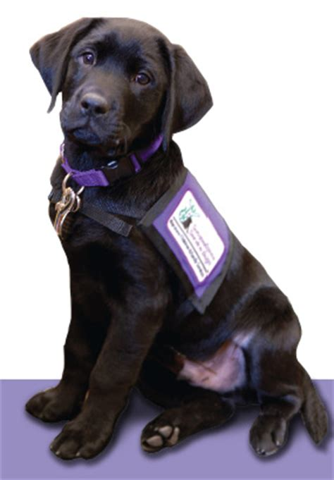 susquehanna service dogs tabs for labs keystone human services