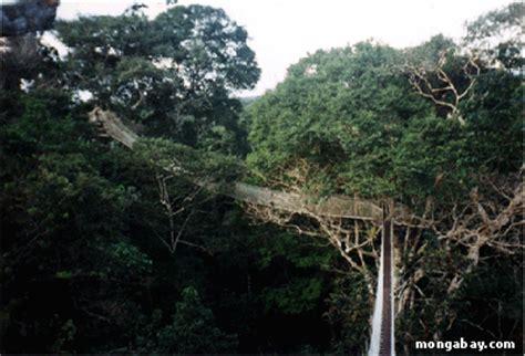 What Does Canopy In The Rainforest Dosel Bosque Lluvioso Investigaci 243 N Estudio