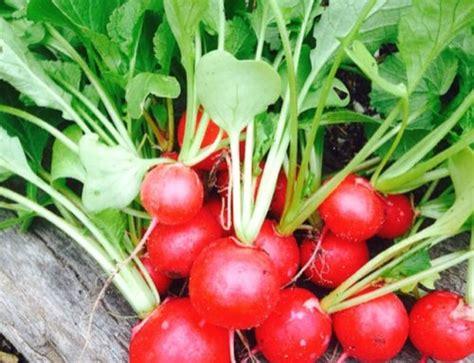 Ph For Vegetable Garden Choose The Best Soil For Your Veggie Garden Southpoint