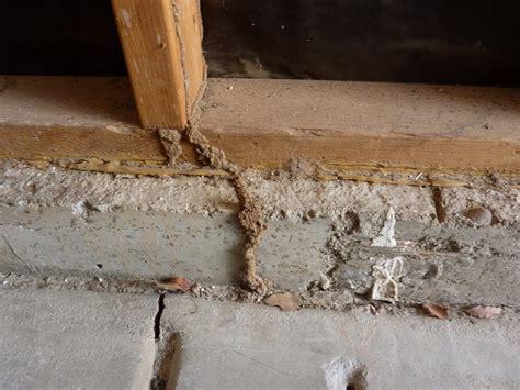 Termites In Furniture by Termite Holes In Furniture American Hwy