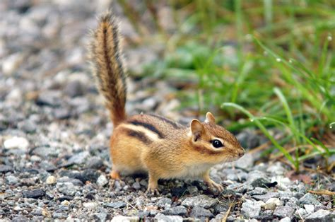 chipmunk house chipmunk house 28 images chipmunk house garden free stock photos rgbstock free