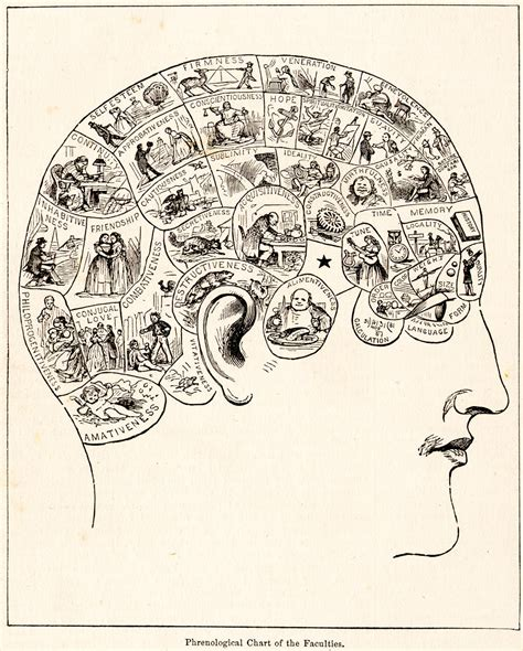 what does layout artist mean phrenology wikipedia