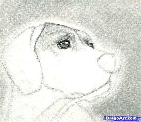 imagenes no realistas faciles de dibujar como dibujar algunos animales realistas parte1 taringa