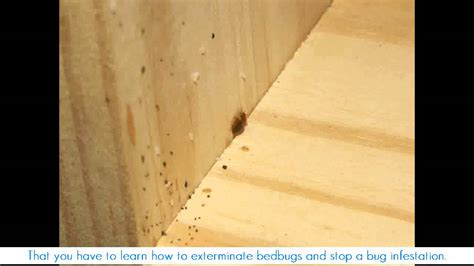 how to know if u have bed bugs how big are bed bugs how to know if you have bed bugs youtube