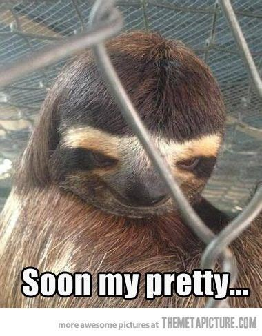 Asthma Sloth Meme - 84 best creepy sloth images on pinterest sloth memes