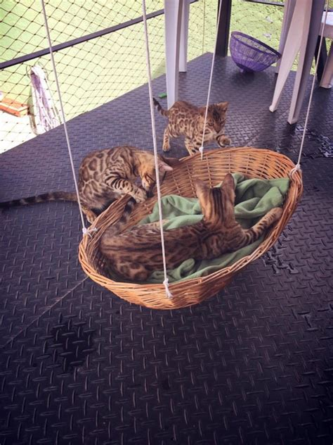 swing cat 25 warm and cozy cat beds home design and interior